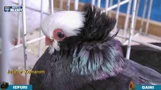 getlinkyoutube.com-Expozitie de porumbei
