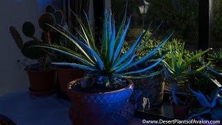 getlinkyoutube.com-My Cacti & Succulent Plants end of November Update