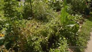 100 Sq. Foot Biointensive Test Garden Tour