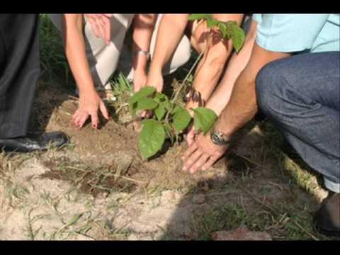 Desmatamento e Reflorestamento Ambiental