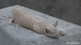 getlinkyoutube.com-2014 7 17 障害のある子猫 Kitten with disabilities 【野良猫 観察記】