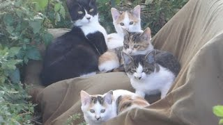 getlinkyoutube.com-【衝撃】野良猫母親が子猫を守りまくるwww