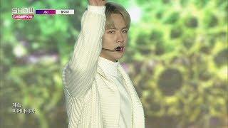 Show Champion EP.259 JBJ - My Flower [JBJ -꽃이야]