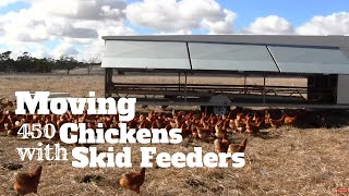 getlinkyoutube.com-Moving 450 Chickens and Skid feeders