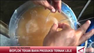 getlinkyoutube.com-Bioflok Tekan Biaya Produksi Ternak Lele
