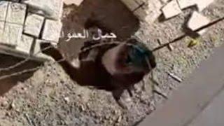 getlinkyoutube.com-شاهد كلب البيتبول يصعد للطابق الثالث عن طريق الحبل بالهواء مع جمال العمواسي