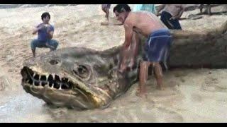 getlinkyoutube.com-【驚愕】海に棲む超巨大生物たち!驚きの姿