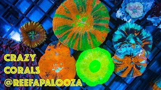 getlinkyoutube.com-Crazy Corals of ReefAPalooza