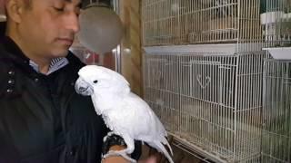 كوكتيل حيوانات وطيور مع جمال العمواسي