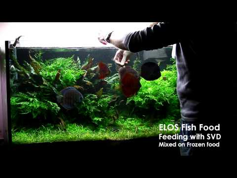 Feeding with ELOS FISH FOOD SV1 and SVD