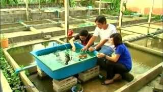getlinkyoutube.com-Farm fish of Thai 2