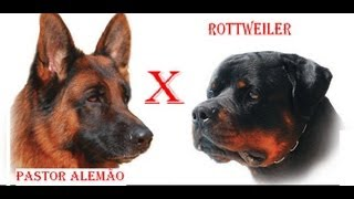 getlinkyoutube.com-Rottweiler Vs Pastor Alemão