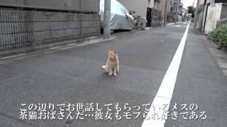 getlinkyoutube.com-最強に人懐こい野良猫、暴虐のメス猫となる The friendliest stray cat is a wild kid