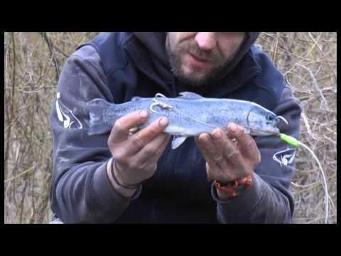 Clan Silure - Einsteigertipps - Das Anködern von Köderfischen
