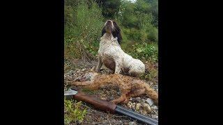 getlinkyoutube.com-Duck and Fox Hunting Ireland Go Pro