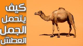getlinkyoutube.com-كيف يتحمل الجمل العطش وظروف الصحراء القاسية ؟