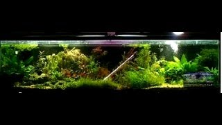 getlinkyoutube.com-How Many Fish Can I Put In My Aquarium The Legs to a Table Rule.