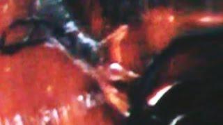 getlinkyoutube.com-Shapeshifting Non-Humans Capture Compilation (Part 1 2016 R.Bruce)