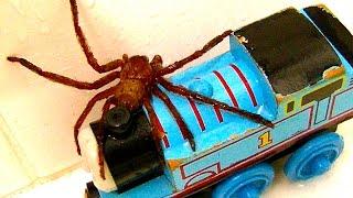 getlinkyoutube.com-Big Spider On The Bath Toys Dyson GoPro Cam Scary Video