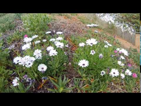 Backyard Flower Closing Time Lapse
