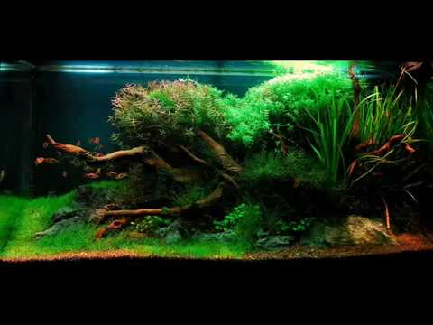 Indoaquascape.wmv