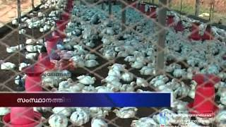 getlinkyoutube.com-Unauthorized poultry farm in kerala : Asianet News investigation