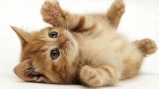 getlinkyoutube.com-Various Cat sounds Guaranteed to Make Your Cat go Crazy! 2 Hours!