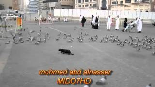 getlinkyoutube.com-فيديو   قط يتفنن في صيد الحمام ويفترسهم في الحرم المكي