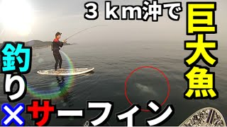 getlinkyoutube.com-#1サーフィンしながら釣りをしたら巨大魚が・・・ 【SUPフィッシング】