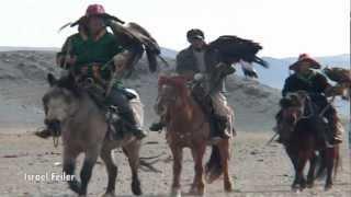 getlinkyoutube.com-Golden eagle hunting training