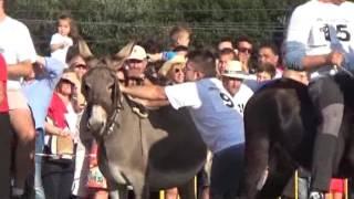 getlinkyoutube.com-Tanos 2016 Carrera burros 1