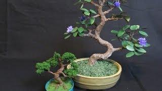 getlinkyoutube.com-Make a Bonsai Tree out of Wire