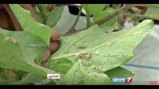 getlinkyoutube.com-Homemade Organic Pesticide | 'Siriya Nangai Kashayam' & 'Neermore Karaichal' | Poovali | News7 Tamil