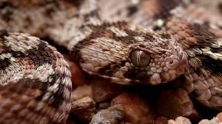 10 Worlds Most Venomous Snakes