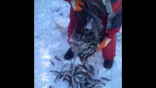 getlinkyoutube.com-Рыбалка мордой
