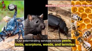 Get High Quality Pest Control Services in Arizona at Wattspest.com