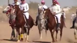 شيلة ال هندي يام كلمات حمد شايع اليامي اداء صالح ال كليب