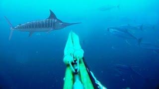 getlinkyoutube.com-Blue Water Spearfishing Pesca Sub, com Diego Santiago