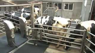 getlinkyoutube.com-GEA Farm Technologies - AutoRotor PerFormer