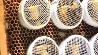 getlinkyoutube.com-تربية وإكثار نحل العسل للمرأة الريفية  في عُمان 2 - فيلم