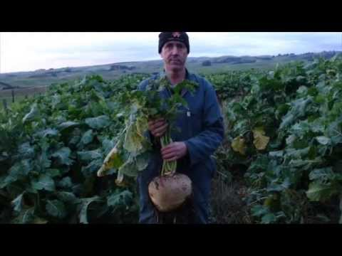 Introduction to Trust Nature' BioVital System
