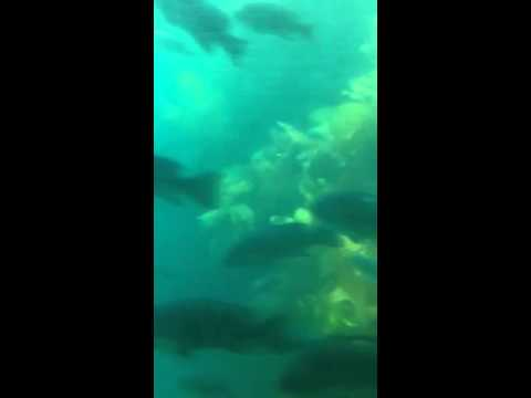 Semi-Submersible Tour Catalina Island Part 3