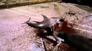 getlinkyoutube.com-Why We Love Sharknado - Best Scenes
