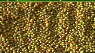 getlinkyoutube.com-इस प्रकार करें मूंग व उर्द की उन्नत खेती
