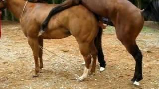HORSES DO IT TAKE 2 width=
