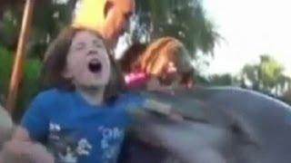 getlinkyoutube.com-Dolphin Bites Child: Orlando Seaworld Dolphin Caught on Tape   Good Morning America   ABC News