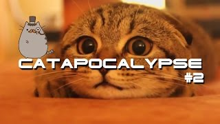 getlinkyoutube.com-Best Cats Compilation \ Catapocalypse Coub #2 \ Приколы с котами \Котопокалипсис Coub #2