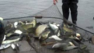 getlinkyoutube.com-Fish Haul 2- Netting Fish on the Delaware River 5-5-09