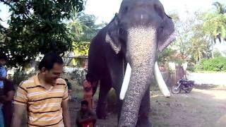 getlinkyoutube.com-Elephant bathing/feeding Part 1