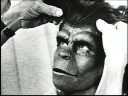 Planet of the Apes - Actor Background